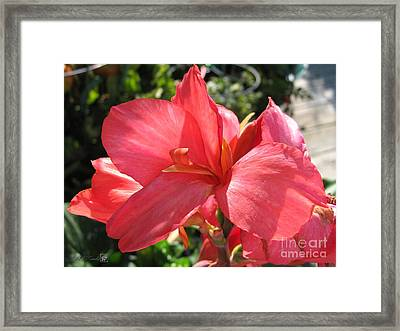 Framed Print featuring the photograph Dwarf Canna Lily Named Shining Pink by J McCombie