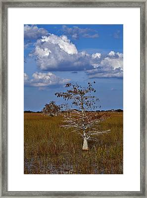 Dwarf Cypress Framed Print