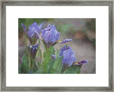 Framed Print featuring the photograph Dwarf Iris With Texture by Patti Deters