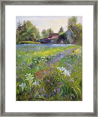 Dwarf Irises And Cottage Framed Print by Timothy Easton