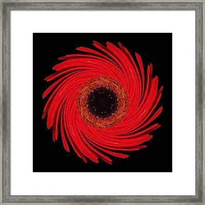 Framed Print featuring the photograph Dying Amaryllis Flower Mandala by David J Bookbinder