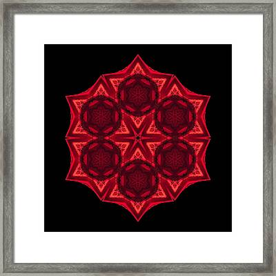 Framed Print featuring the photograph Dying Amaryllis IIi Flower Mandala by David J Bookbinder