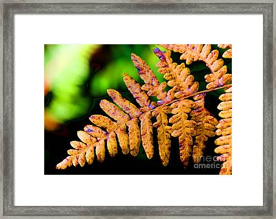 Dying Beauty Framed Print by Tap On Photo