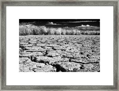 Dying Of Thirst Framed Print by Laurie Search