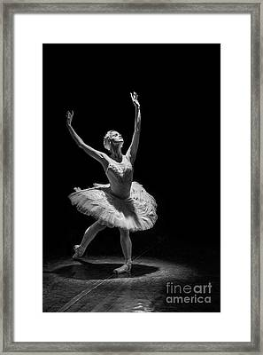 Dying Swan 6. Framed Print by Clare Bambers