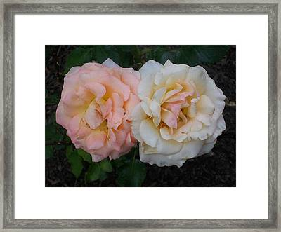 Framed Print featuring the photograph Dynamic Duo by Jewel Hengen