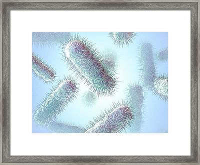 E. Coli Bacteria Framed Print