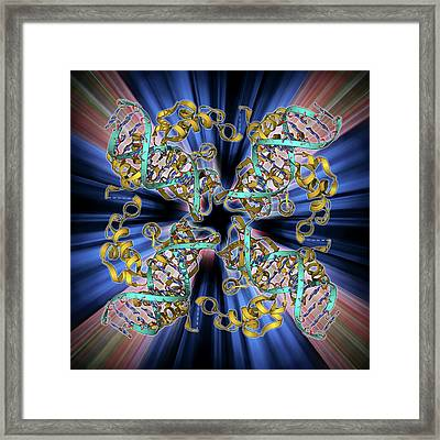 E Coli Holliday Junction Complex Framed Print by Laguna Design