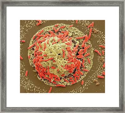 E. Coli Induced Cell Death Framed Print
