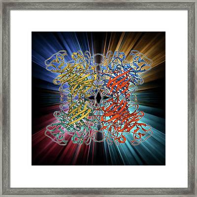 E Coli Virulence Factor Molecule Framed Print