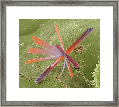 E8400300 - Pesticide Framed Print by Spl