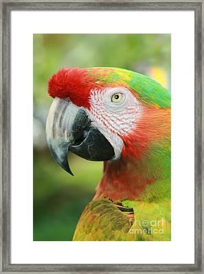 Each New Dawn Framed Print by Sharon Mau
