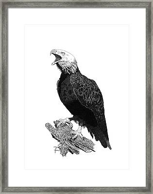 Eagle 1 Framed Print
