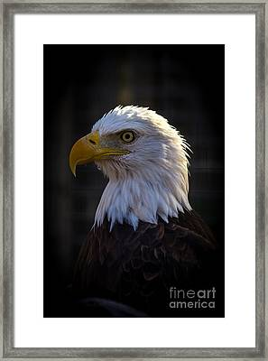 Eagle 1 Framed Print by Jim McCain