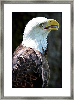 Framed Print featuring the photograph Eagle 2 by Amanda Vouglas