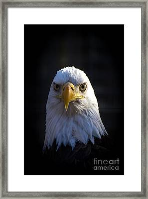 Eagle 2 Framed Print by Jim McCain