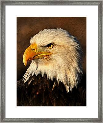 Eagle 51 Framed Print