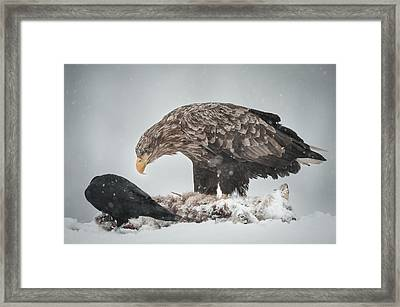 Eagle And Raven Framed Print by Andy Astbury