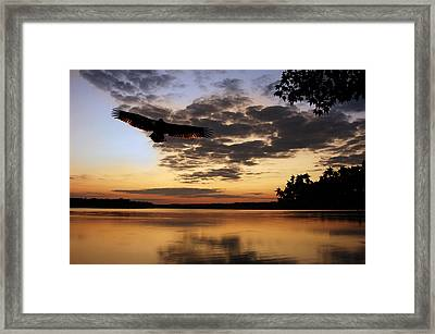 Eagle At Dusk Framed Print