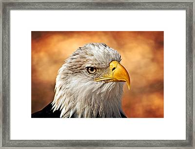 Eagle At Sunset Framed Print by Marty Koch