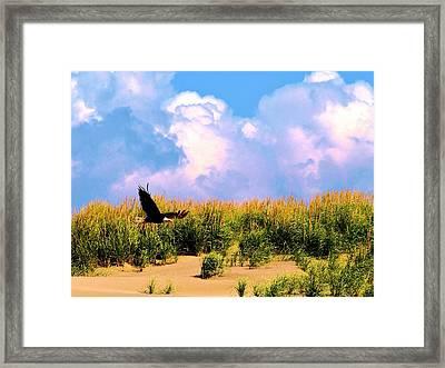 Eagle At The Beach Framed Print