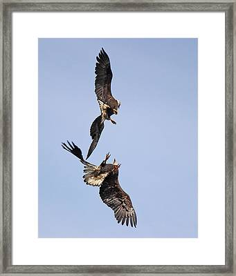 Eagle Ballet Framed Print