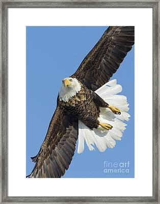 Eagle Embankment Framed Print by John Blumenkamp