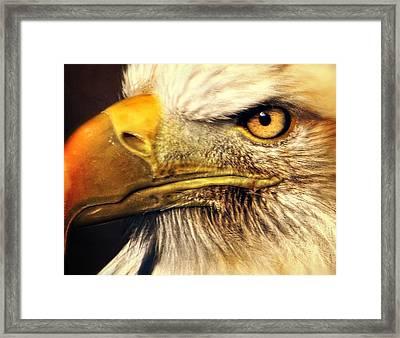 Eagle Eye 7 Framed Print by Marty Koch