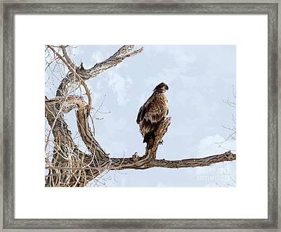 Eagle Eye Framed Print by Lori Tordsen
