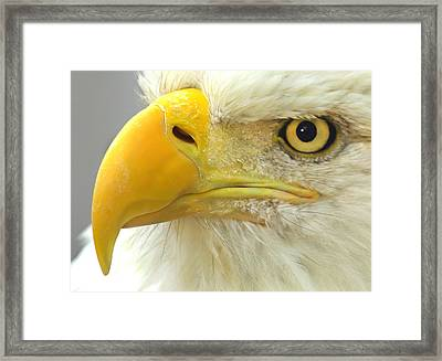Eagle Eye Framed Print by Shane Bechler