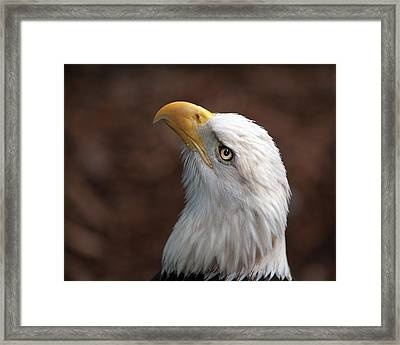 Eagle Eye Framed Print by Tammy Smith