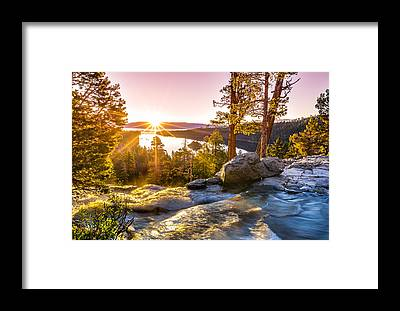 Water Tree Framed Prints