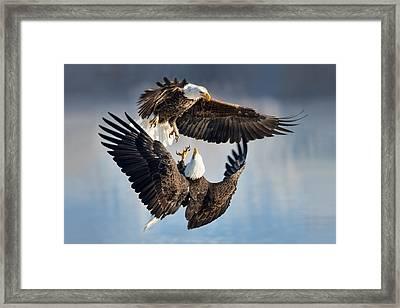 Eagle Fight Framed Print