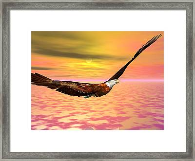 Eagle Flight Framed Print