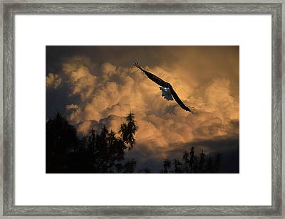 Eagle Flying Into The Storm Framed Print by Frank Wilson