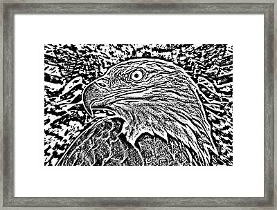 Eagle Head Cont Framed Print