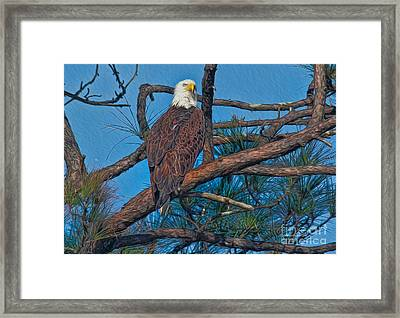 Eagle In Oil Framed Print