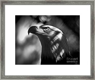 Eagle In Shadows Framed Print