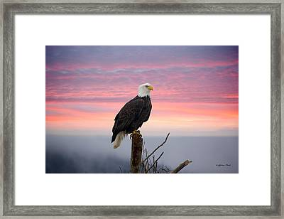 Framed Print featuring the photograph Eagle In The Mist by Sylvia Hart