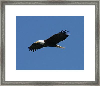 Eagle Framed Print by Jeff Wright