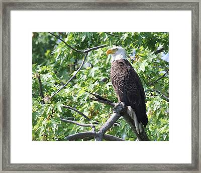 Eagle Lookout.  Framed Print