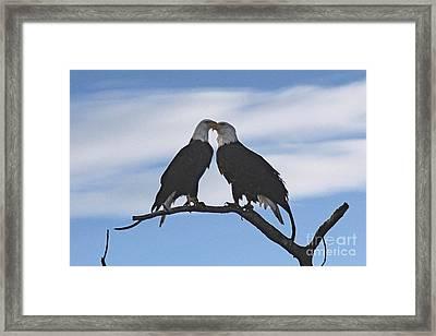 Eagle Love Framed Print