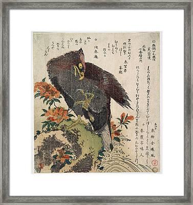 Eagle On A Rock Framed Print