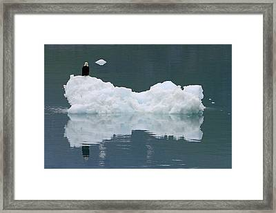 Eagle On Ice Framed Print by Shoal Hollingsworth