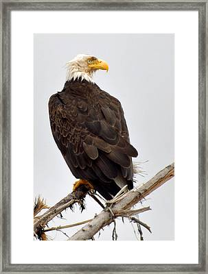 Eagle On Watch Framed Print by Michael Bruce
