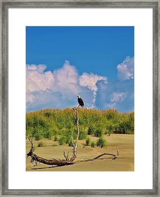 Eagle On Watch Framed Print