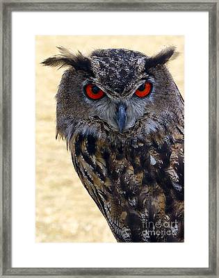 Eagle Owl Framed Print by Anthony Sacco