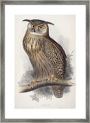 Eagle Owl.  Bubo Maximus Framed Print by Edward Lear