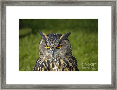 Eagle Owl Framed Print by Clare Bambers