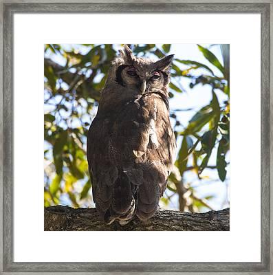 Eagle Owl Framed Print by Craig Brown